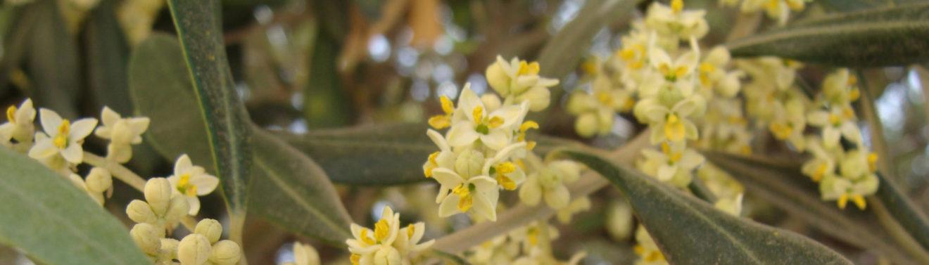 Что такое спираль цветения?